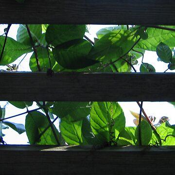 Sky Peeking Through by Lynnsong