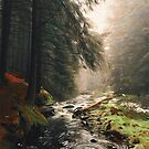 The river through the Forest by Andrea Mazzocchetti