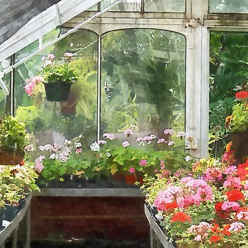 Geraniums in Greenhouse by SudaP0408