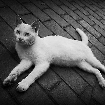 Lazy Cat by Alphafish