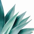 Agave flare II by Gale Switzer