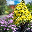 Beautiful yellow flowers on a garden background by Danielasphotos