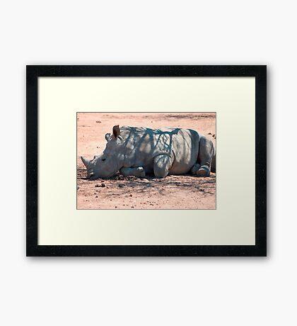 A CALF - WHITE RHINOCEROS - Ceratotherium simum Framed Print