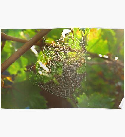 Spider Magic Poster