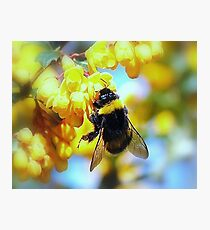 BUMBLE Photographic Print