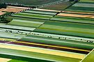 Field Art in Bavaria by Kasia-D