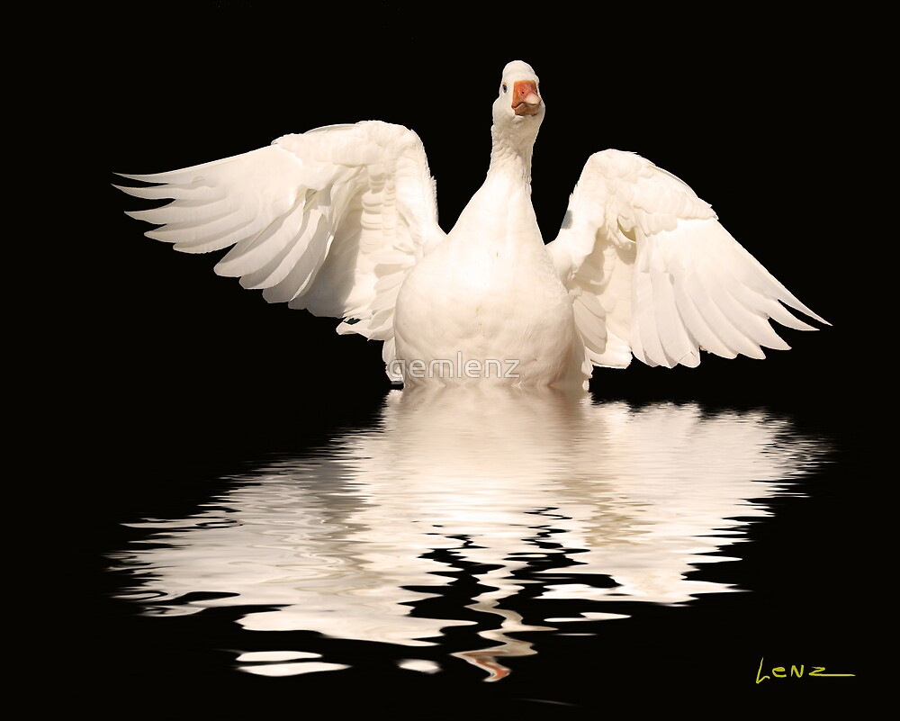White Goose by George Lenz