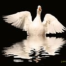 White Goose by gemlenz