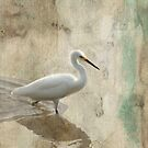 Snowy Egret in Grunge by Rosalie Scanlon