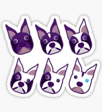 Boston Terrier Various Colorings Purple Angled Heads Sticker