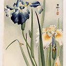 Irissen by Ruth Moratz