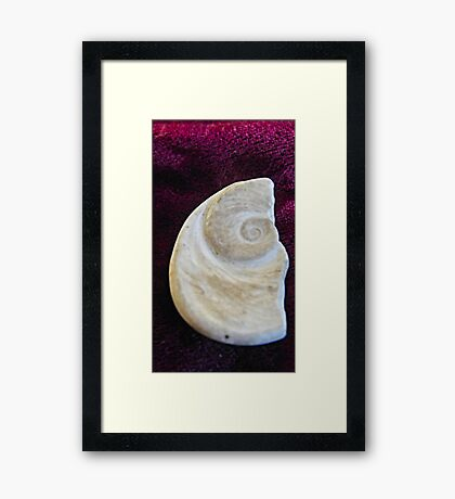 Sea fossil  Framed Print