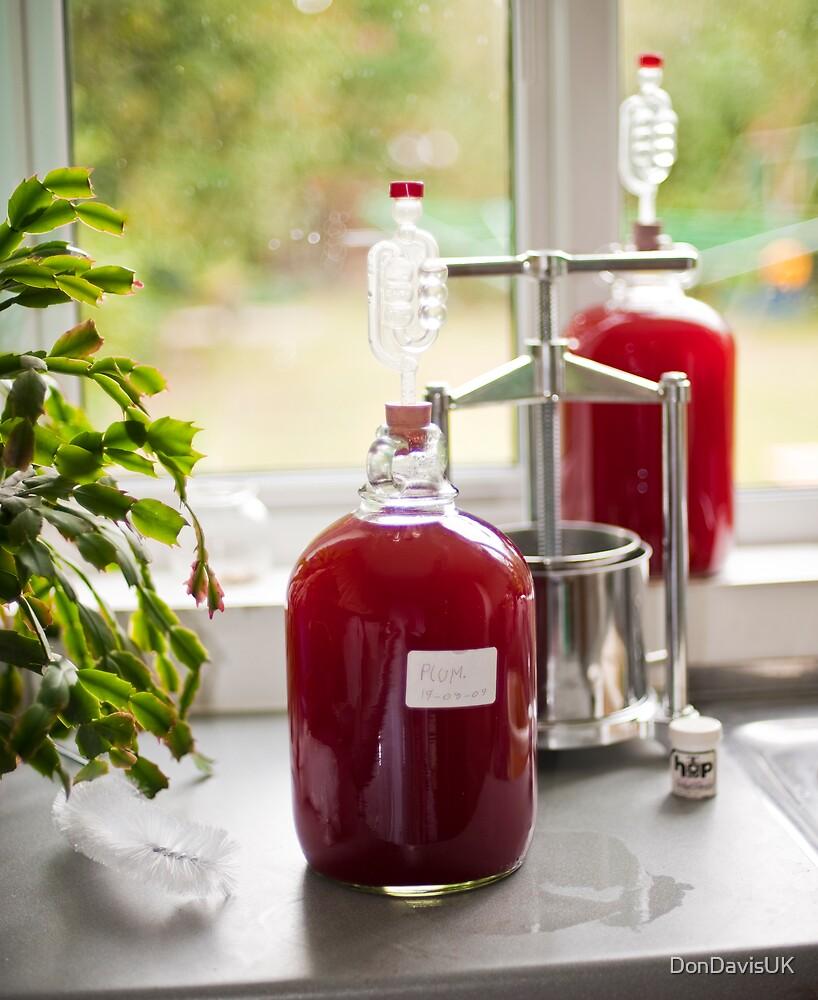 Making Country Wine: Plum by DonDavisUK
