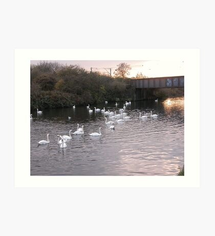 White Swan's large school on the Canal Day out Art Print