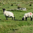 Dartmoor Ewe And Lamb by lezvee