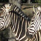 Striped Friends by Roselynn