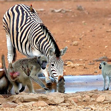 AFRICAN WILDLIFE - SHARE AND SHARE ALIKE ! by mags