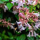 Busy Bee by widdy170