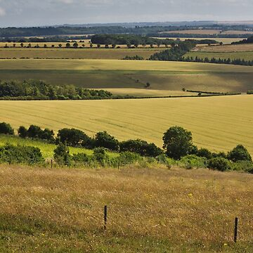 The South Downs, Hampshire, England. UK by heidipics