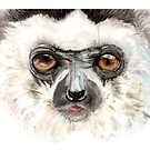 Curious Diademed Sifaka  by Joel Borgerson
