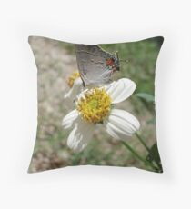 Hairstreak on Spanish Needles Throw Pillow