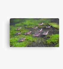 Ten Little Ducks Canvas Print