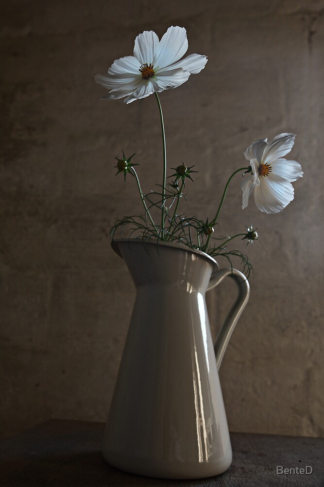 Cosmea by BenteD
