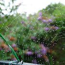 Web of Lace by LumixFZ28