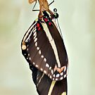 New Zebra Longwing Butterfly by Dawne Dunton