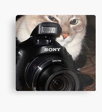 Camera Cat Metal Print