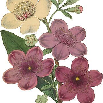 Lovely Vintage Rose Myrtle Mauve Lavender Flowers  by TheKitch