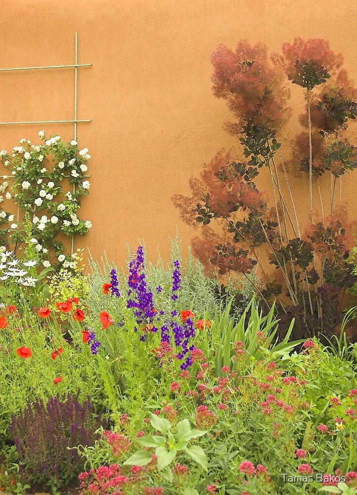 Garden in Santa Fe by Tamas Bakos