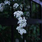 Beauty In The Gardens  by yafoto