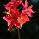 flowerburst by dinghysailor1