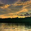 Sunset Swim on Newfound by Wayne King
