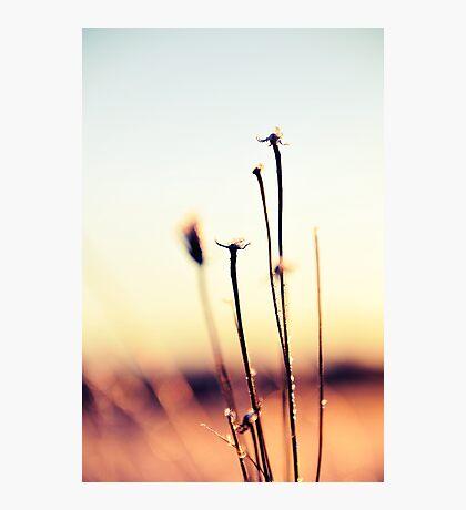 5 Photographic Print