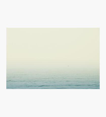 Solitary Bird Photographic Print