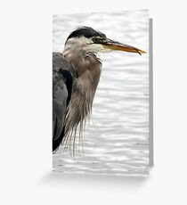Great Blue Heron Portrait With Tongue Greeting Card