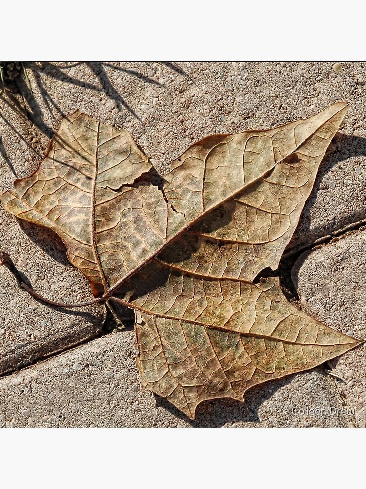 Fallen Leaf by colgdrew