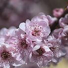 Spring Blossom Makes You Sing by Joy Watson