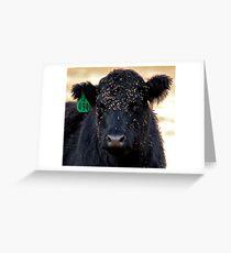 Burr-Faced Calf Greeting Card