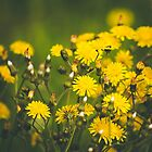 186 - Wild flowers by CarlaSophia