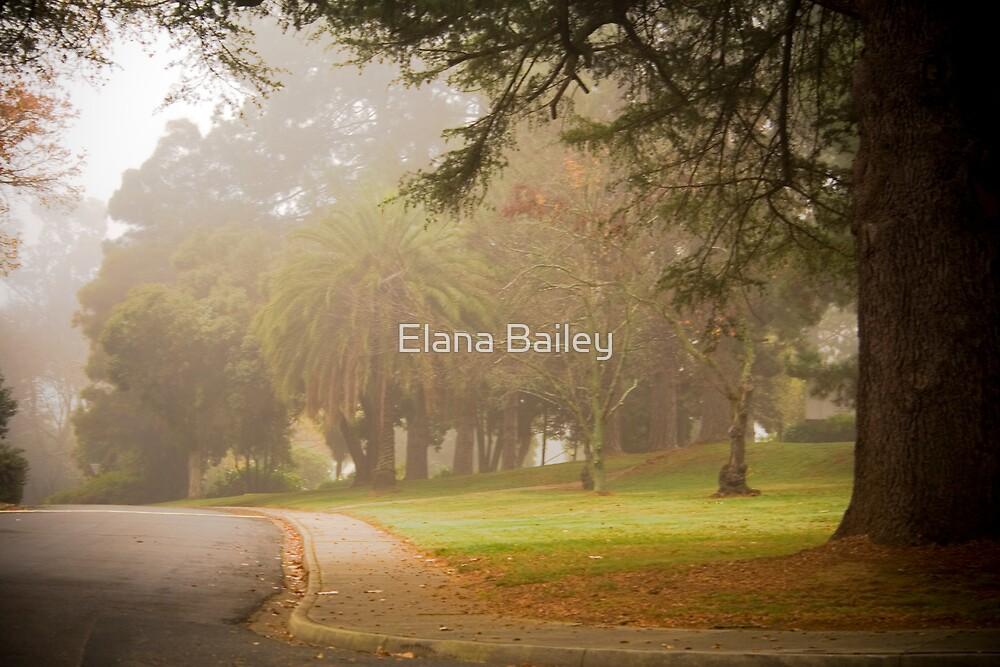 A misty morning at La Trobe Uni at Beechworth by Elana Bailey