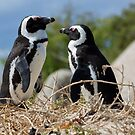 Two African Penguins (Spheniscus demersus) by Yair Karelic