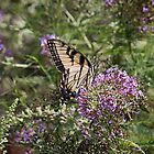 Butterfly print, tiger swallowtail, tiger swallowtail butterfly, yellow butterfly, nature, nature photography by bwatkinsphoto