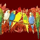 Colorful budgie pattern by lifewithbirds