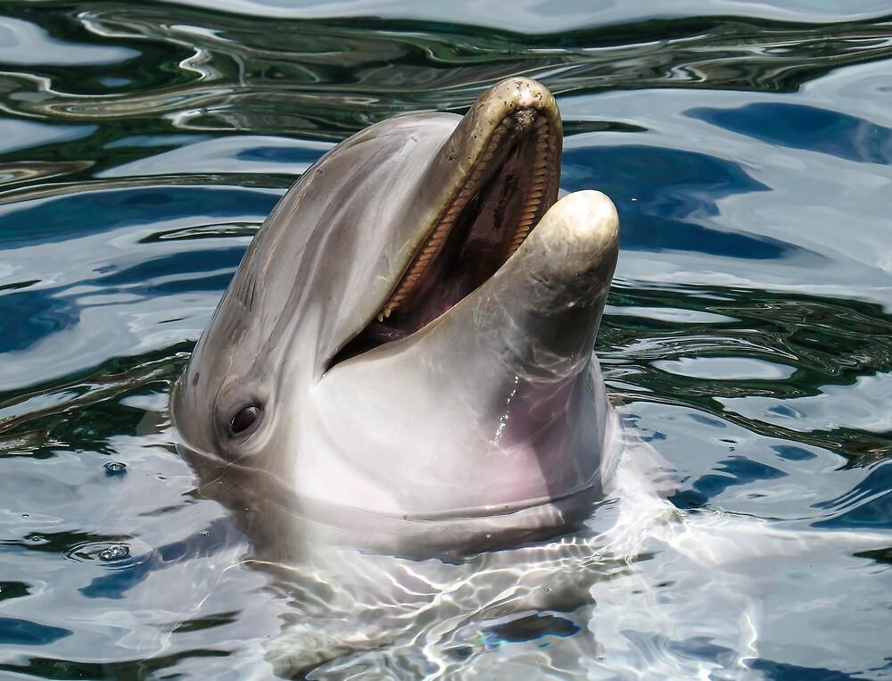 dolphin by memedream
