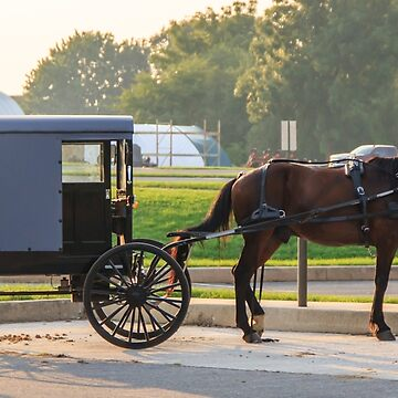 Amish Buggy by RoseC