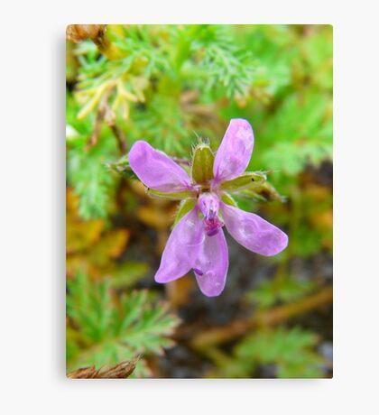 Little Purple Flower Canvas Print