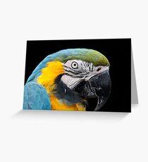 Hyacynth macaw Greeting Card